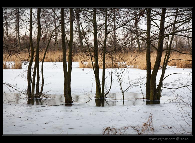 Zimní příroda foto