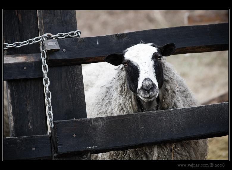 fotky zvířat 01
