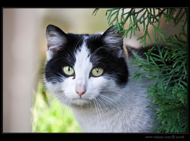fotky zvířat 11