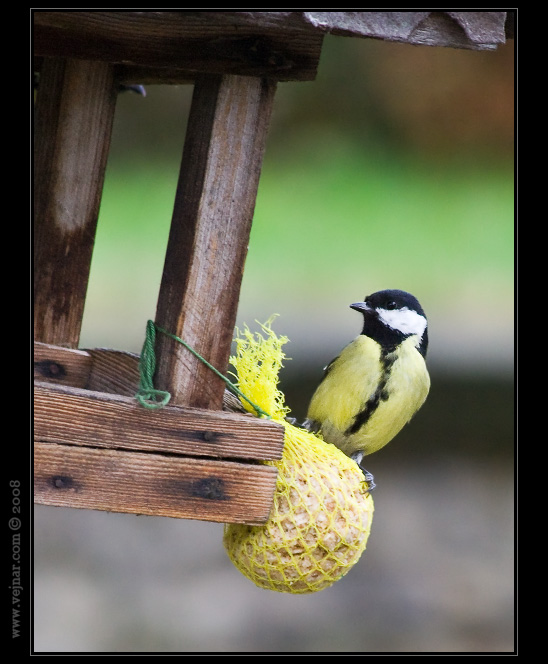pták u krmítka
